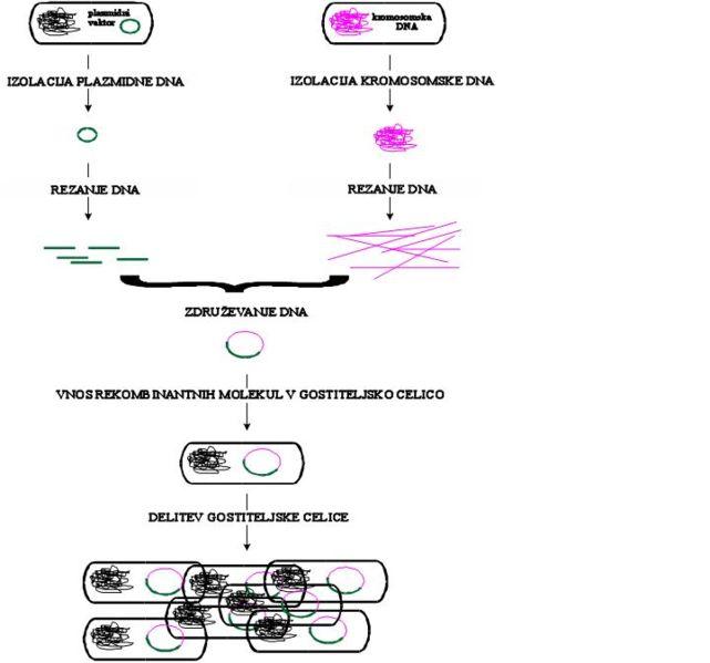 File:Tehnologija rekombinantne DNA.JPG