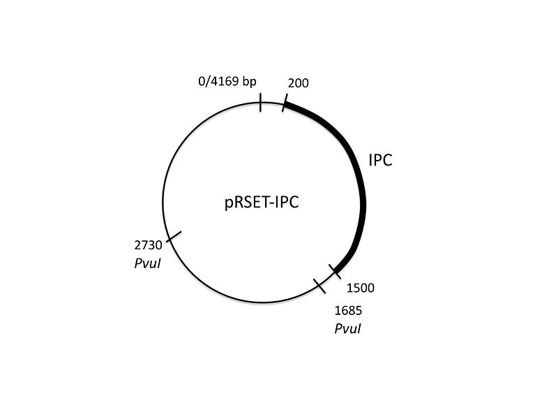 File:20.109 pRSET-IPC-map.jpg