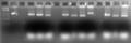 Thumbnail for version as of 01:30, 24 May 2011