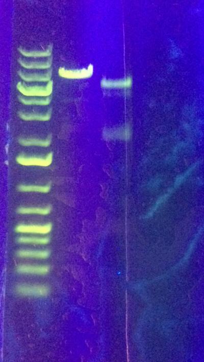 Today's gel