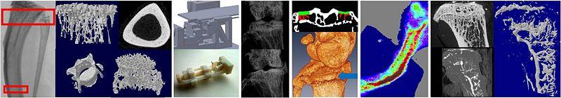 File:Pathomechanobiology Banner5.JPG