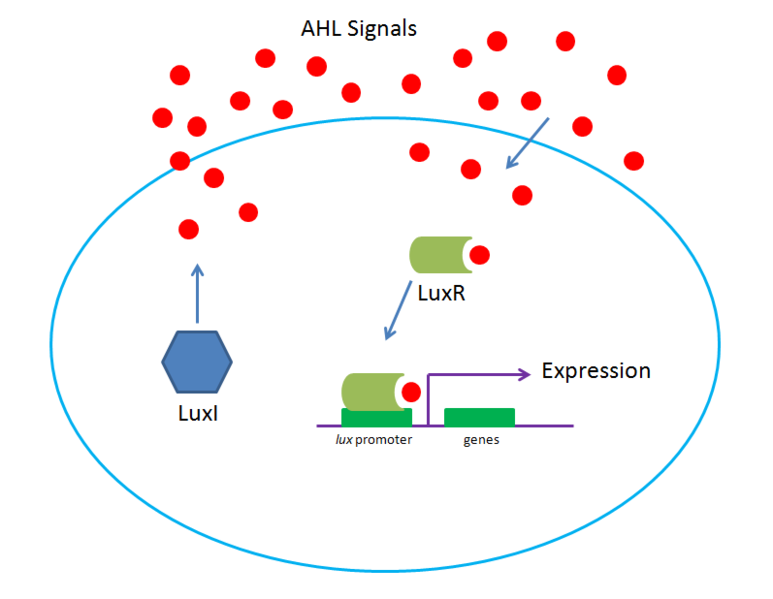 File:Lux System High Conc.png