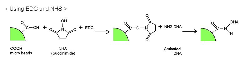 File:DNA beads method1.jpg