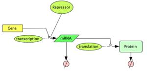 Repressed Gene Expression