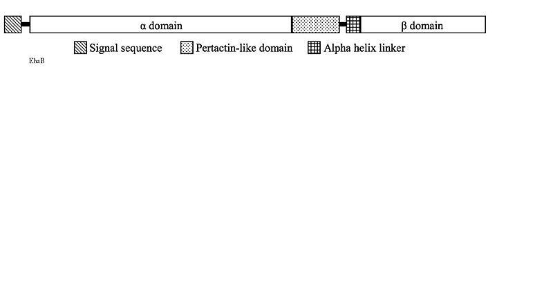 File:Ehab diagram2.jpg