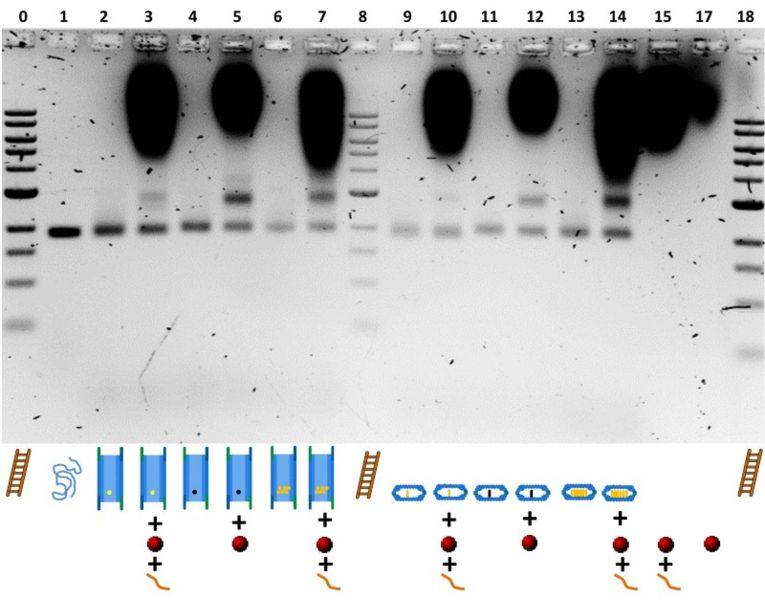 File:BM12 Nanosaurs ImageGel4.jpg