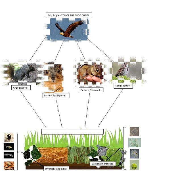 File:CRETEJUNGLEXO-image1232.jpg