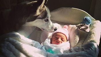 Husky newborn.jpg