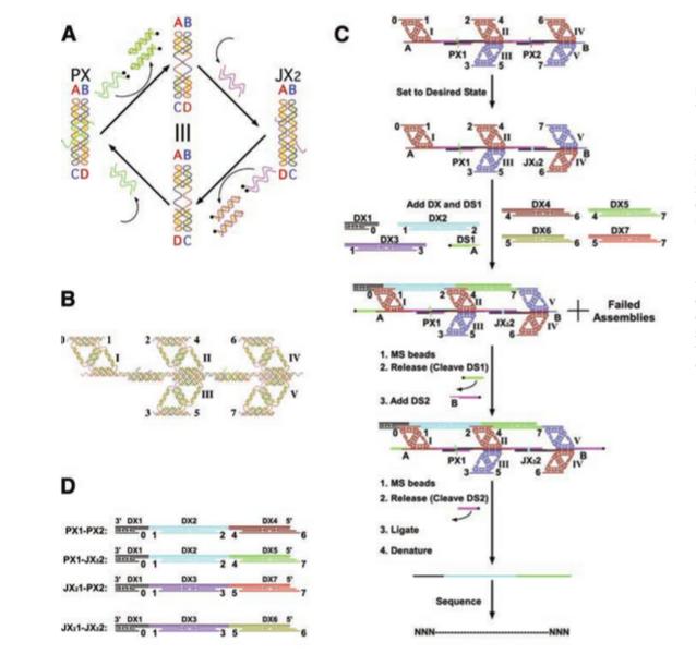 File:Translation of DNA1.png