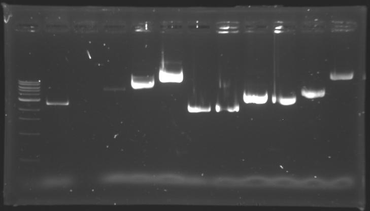 File:Digestionenzymecheck 150710.jpg