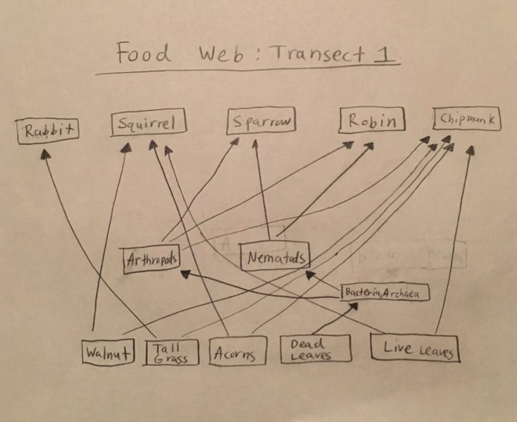 File:Maryam food web.png