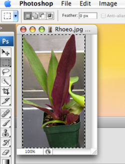 Select Photo iPhoto and Photoshop S11.png