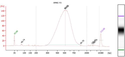 AMKEP2 Bioanalyzer.PNG