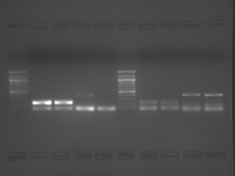 File:S09 M3D5 WF-RedBlu-0.48.BMP
