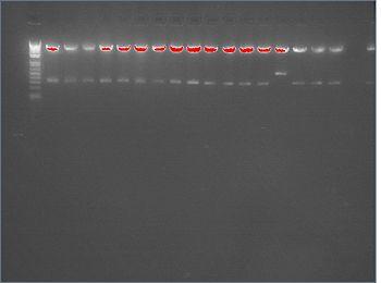 2-assembly-diagnost-L.jpg