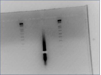 5xGalprmt gel extract 07-21.jpg