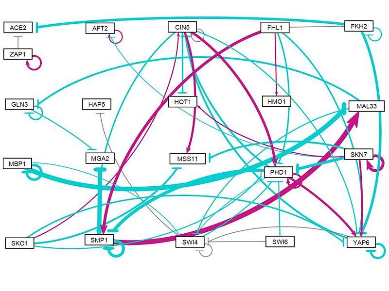 File:Wt alone w1 network v1.0.10.jpg