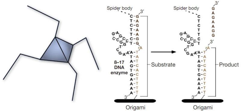 File:Molecular Spider.jpg
