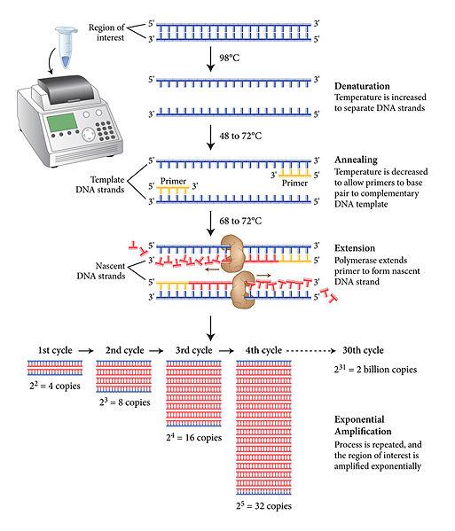 File:PCRBonus.jpg