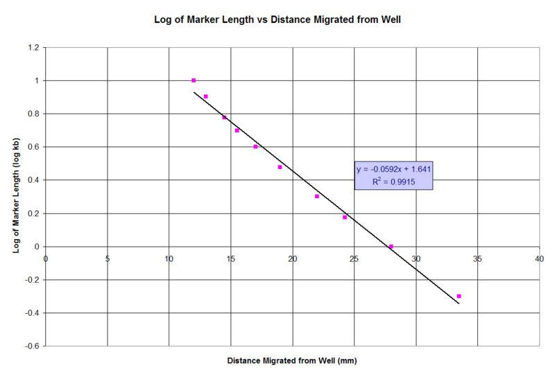 File:Graph M13 BamHI AgaroseGel.jpg