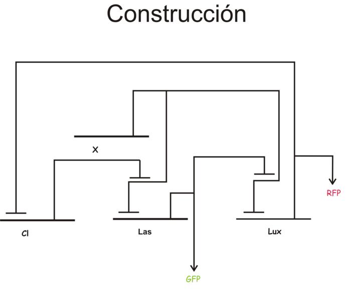 File:IGEM Mexico 2007 logicgates.png