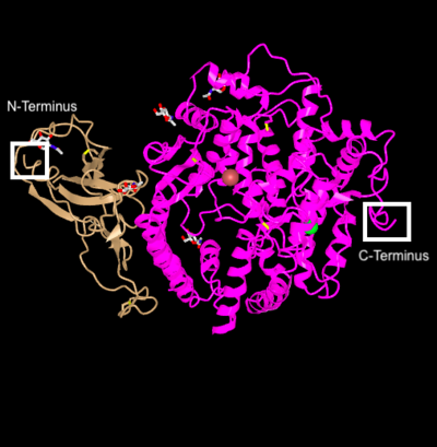 MAP Protein NandC.png