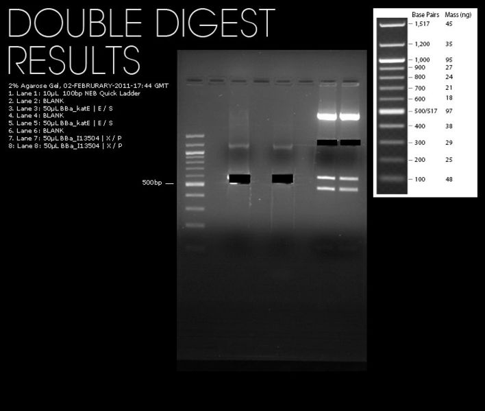 File:02022011-double digests.jpg