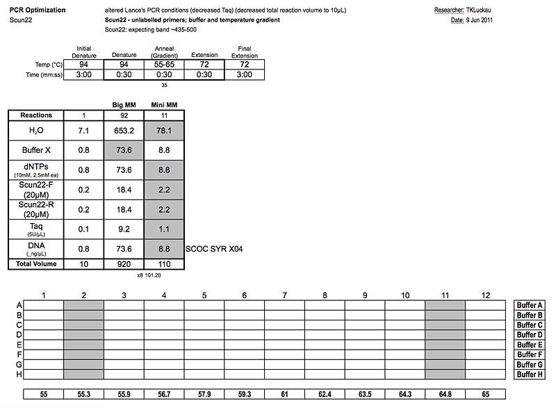 20110609 PCR 2.jpg