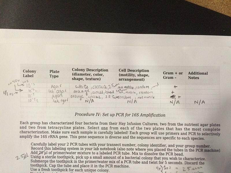 File:Lab 3 table 2.JPG