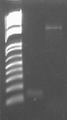 Thumbnail for version as of 08:53, 16 August 2010
