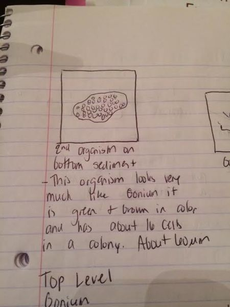 File:Bottom level organisms 2. png