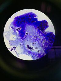 BacilliBacteria