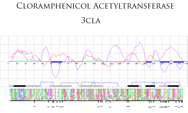 Fig.1 Chloramphenicol Acetyltransferase Type III (PDB code: 3cla). The folding score is shown in purple. Folding score troughs (highlighted by blue bars) pinpoint regions that are likely to be important in stabilising the fold, correlating well to regions rich in topohydrophobic residues ('T'). Conservation scores (red line) are calculated from the parent alignment using the Scorecons server (9). Folding score peaks (highlighted by green bars) corresponding to regions of high conservation indicate potential functional regions. Manually selected motifs are denoted by black bars; other highly conserved regions are denoted by grey bars. The conservation scores are normalised values, so their values are percentages ranging from 0 to 100. The horizontal axis denotes the sequence.