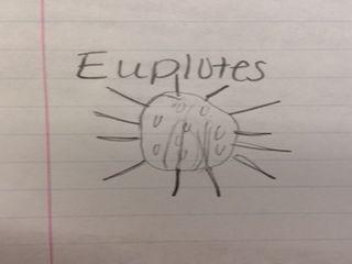 File:Euplote2.JPG