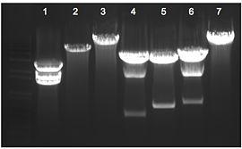 Cloning gel 11/24/09