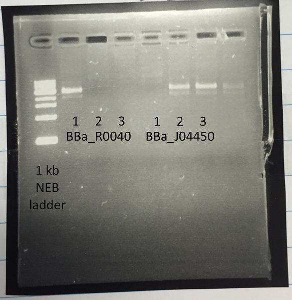 File:PCR Felicia.jpg