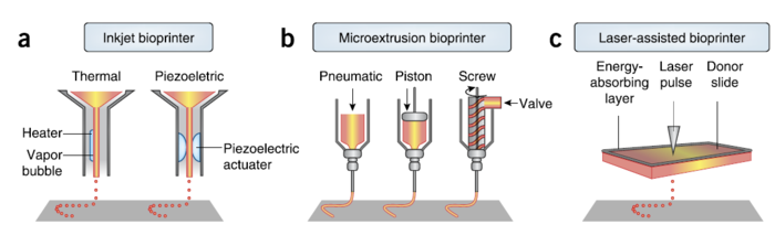 Three different types of bioprinter including inkjet-based, microextrusion, and laser-assisted bioprinters [5]