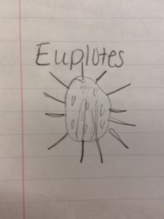 Euplote2.jpg
