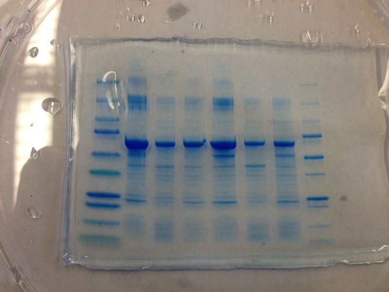 File:S13 M2D7 TR Blue.JPG