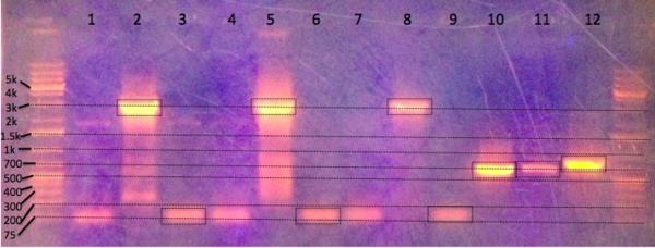 GG PCR