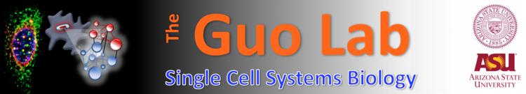 Guo Lab Logo.png