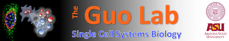 File:Guo Lab Logo.png