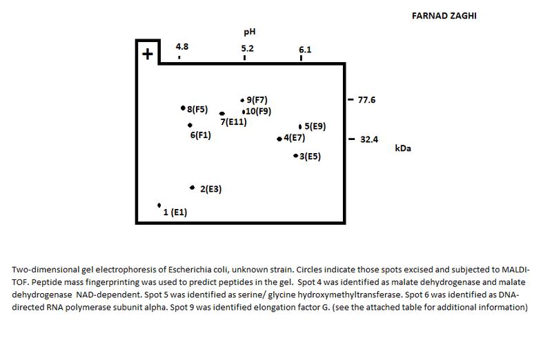 File:2D Gel Explenation.jpg