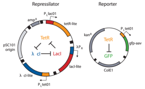 Repressilator Elowitz Plasmids