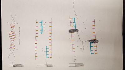 PCR Picture