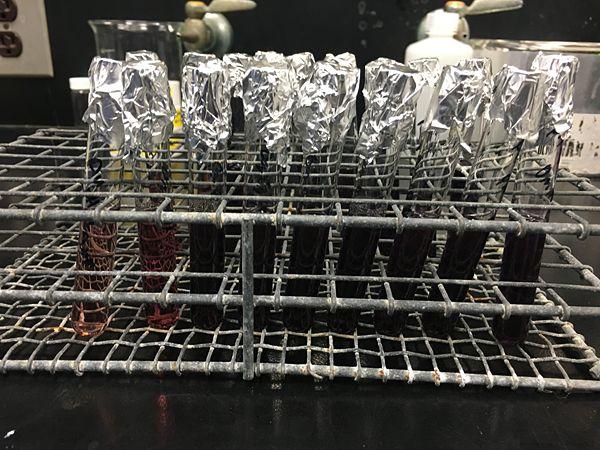 Myoglobin fructose 0mM.jpg