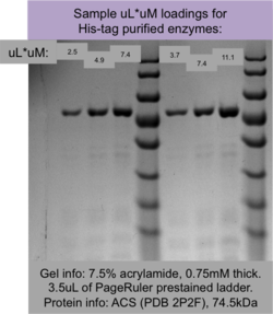 sample of loading different uL*uM amounts of protein.  Protein = His*6 tagged ACS 2P2F