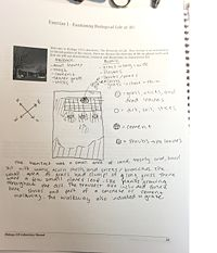 Lab Notebook Work