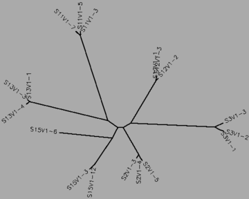 Figure 14:The visit 1 tree for the rapid and nonprogressors, generated by CLUSTALW.