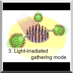 Biomod2011 Team Tokyo111028Light-irradiatedGatheringMode02.png